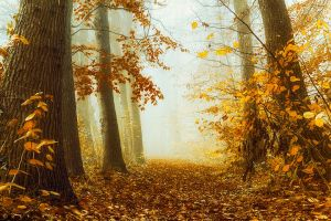 All things must Fall by Oer-Wout
