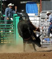 Bull Busting Stock 10 by Rejects-Stock