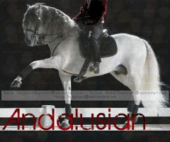 Andalusian Horse by ladykraut