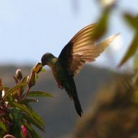 Humming Bird by TBag87