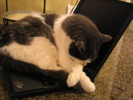Adobe Laptop 5 by cat-lovers