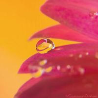 Drop 4 by FrancescaDelfino