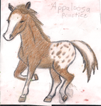 Appaloosa (Traditional) by The-Art-Rat