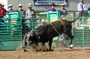 Bull Busting Stock 18 by Rejects-Stock