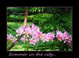 Summer in the city... by LadyAliceofOz