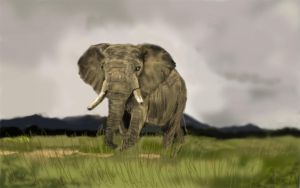 elephant quick paint by cliffbuck