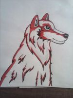 Red Wolf by WolfDawgz