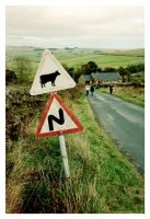 I Brake For Cows by 3hika