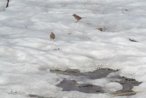 Standing On the Ice and Muck 2 by Miss-Tbones