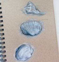 Shell Sketching by Galactic-sky-99