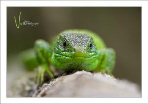 ''V'' is Back! by sG-Photographie