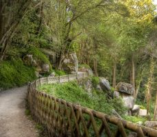 The Path Life Takes Us HDR by Lula939