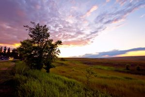 Field At Sunset Stock by mindym306
