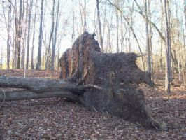 Uprooted Tree by DemonGirl2010