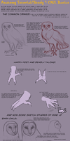 Anatomy Tutorial: Owl Basics by AddictionHalfWay