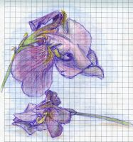 Flowers: iris by RandomSearcher