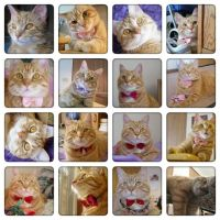 A calander of Lucy by lucytherescuedcat