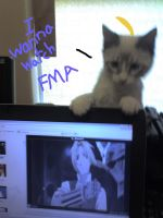 Kitty wants to watch FMA too by MikuTheHedgehog