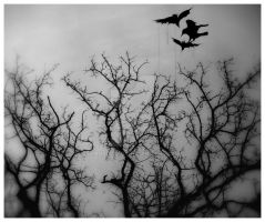crows by andreea10