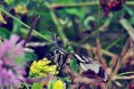 Butterfly by AsseveraVeta