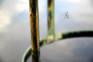 Daddy Long Legs no more by Wam