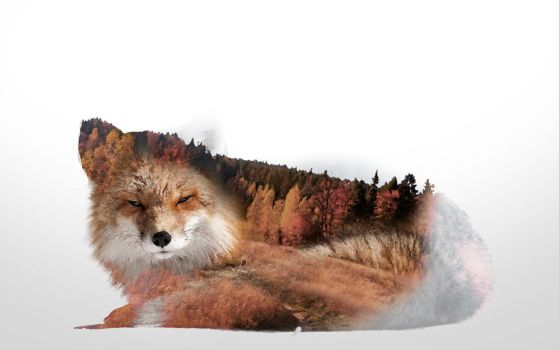 -- Double exposure fox -- by 0l-Fox-l0