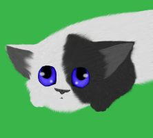 Fluffy kitten Painting Practice. by Dawnshade1