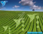 Crop Circle Wallpaper by starsweb