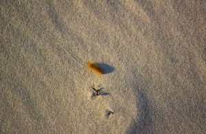 Caterpillar in the Sand by aydonis