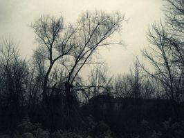 Naked Trees by KatVonB