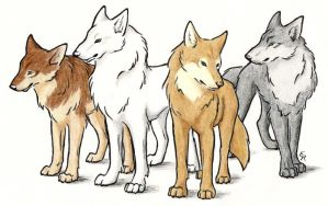 Wolf's Rain Characters by WildSpiritWolf