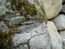 Moss Macro Stock 3 by Equide--Designs