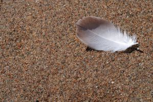 Feather02 by LucieG-Stock