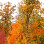 Shades of Autumn 2014.X by MadGardens