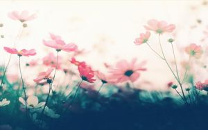 wallpaper pink flowers by Analaurasam