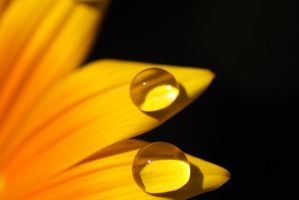 Water drops 37 by yvaine2010
