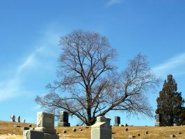 Cemetery Tree II by samaya-stock