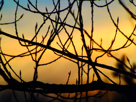 Sunset Snapshot 3 by Kaylee-Photography