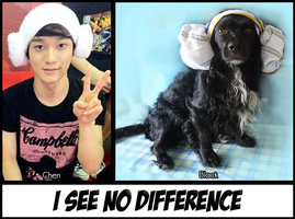 Chen cosplay - My dog's version by SwagSagwa
