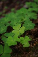 clover by Shearkin