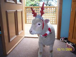 elsie cant wait for xmas by me-and-elsie
