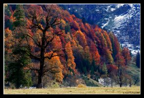 fall 1 by Phototubby