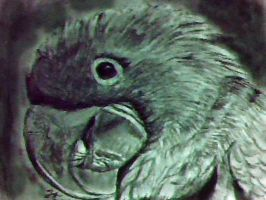 charcoal Parrot by blacknimproud