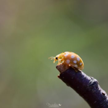 48.52 The little things by Musterkatze