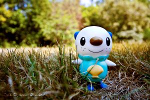 A Wild Oshawott Has Appeared