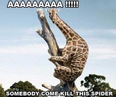 Spiders!!!! by katomatic22