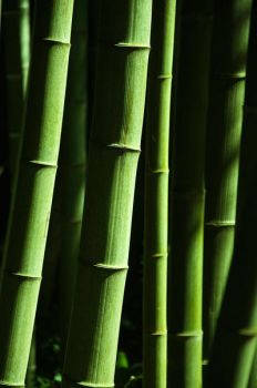Bamboo by Le-Mulot