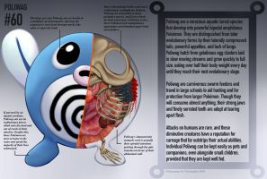 Poliwag Anatomy- Pokedex Entry