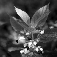 Plitvice: :flower in the shade by Ilharess