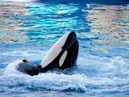 Seaworld Stock 5 by FairieGoodMother